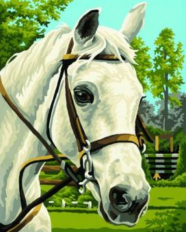 Раскраска по номерам. Белая лошадь , 24х30 см