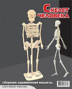 Сборная модель Скелет человека (дерево)