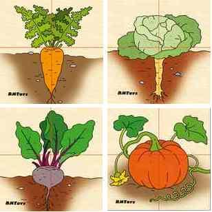 Картинки разрезные Овощи